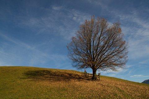 FOTKA - Na vyhlídku Kühbühel a okolo Ritzensee - Strom pod vyhlídkou