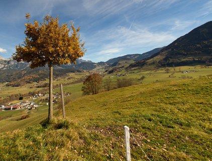 FOTKA - Na vyhlídku Kühbühel a okolo Ritzensee - Strom na vyhlídce