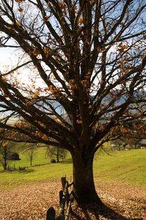 FOTKA - Na vyhlídku Kühbühel a okolo Ritzensee - Strom u vyhlídky