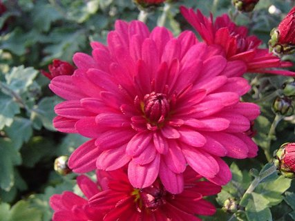 FOTKA - ružová s nádychom do červena