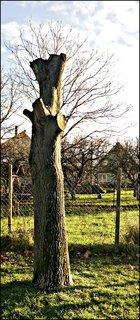 FOTKA - odpílený strom v záhrade