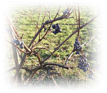 FOTKA - 3.12. a hrozno je stále tam,chutné a sladké