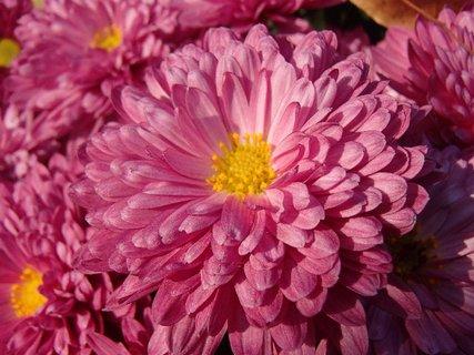 FOTKA - jesenné krásavice