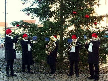 FOTKA - Koncert pod stromkem