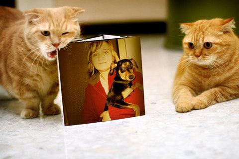 FOTKA - kočky ještě víc