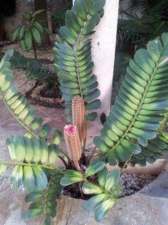 FOTKA - botanika v Mexiku