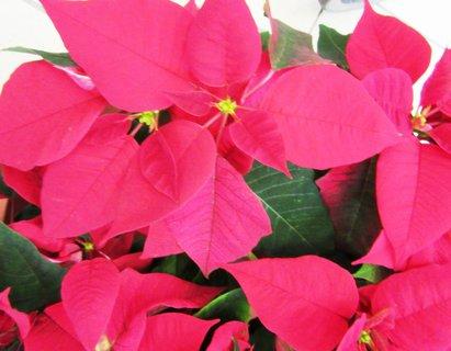 FOTKA - dvacátého prvního prosince má svátek Natálie