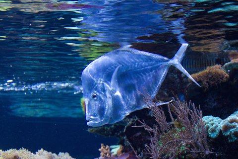FOTKA - Adventní procházka po Salzburgu - Haus der Natur - Placatá ryba v akvariu