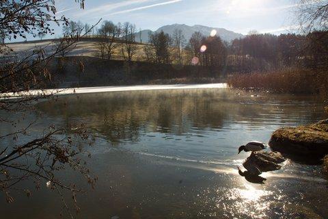 FOTKA - Jaro v prosinci na Ritzensee - Kachna