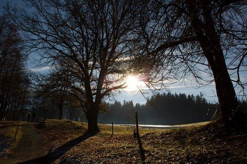 FOTKA - Jaro v prosinci na Ritzensee - Cesta proti slunci