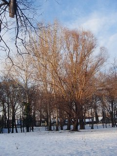 FOTKA - popoludňajšie lúče slnka osvetľujú korunu stromu