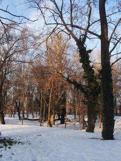 FOTKA - brečtan sa ťahá po kmeňoch stromov aj v zime
