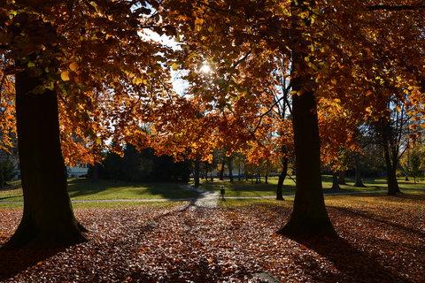 FOTKA - na procházce podzimem