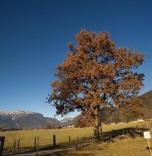 FOTKA - Procházka okolo Ramseidenu - Další strom