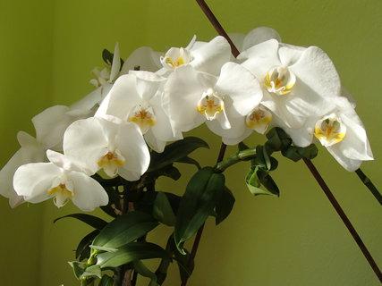 FOTKA - má veľa kvetov