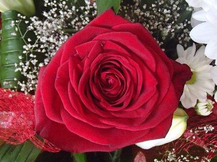 FOTKA - ružička