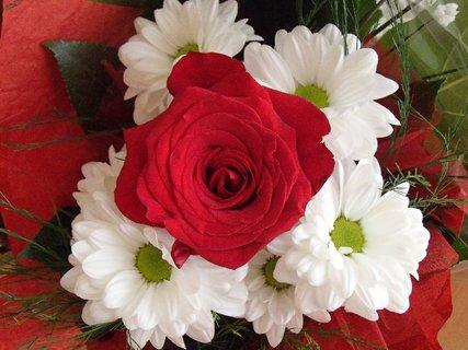 """FOTKA - červená ruža v bielom """"objatí"""""""