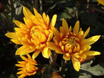 FOTKA - žiarivej farby