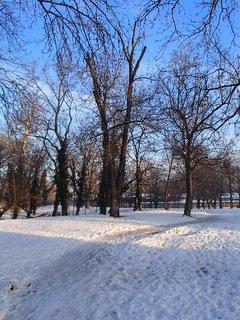 FOTKA - vyšliapaná cestička v parku