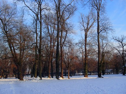 FOTKA - oddychujúce stromy