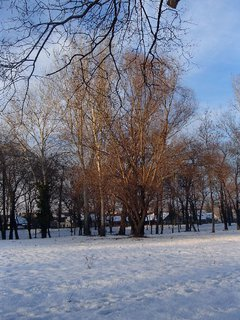 FOTKA - park pod snehom