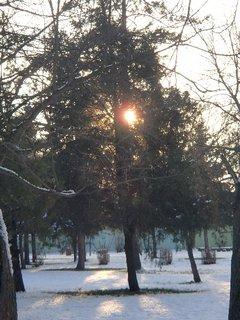 FOTKA - slniečko v korune stromu