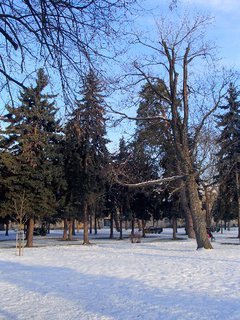 FOTKA - aj stromy oddychujú