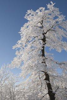FOTKA - zimní  procházkou