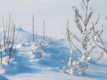 FOTKA - zima na horách