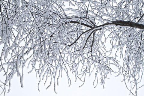 FOTKA - zimn�  krajinou