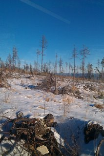 FOTKA - polámané stromy :(