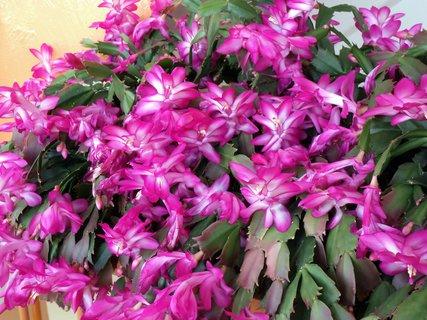 FOTKA - fialová krása