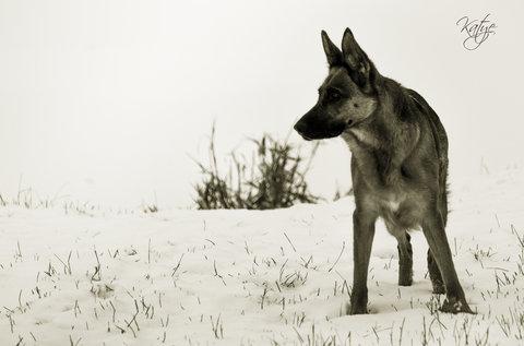 FOTKA - Strážkyně zimy