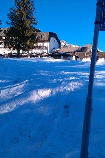 FOTKA - stromy tienia na snehovú plochu