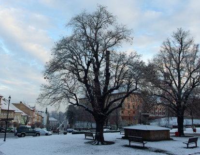 FOTKA - Lednové ráno