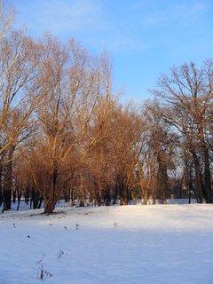 FOTKA - suché koruny stromov v slnečných lúčoch