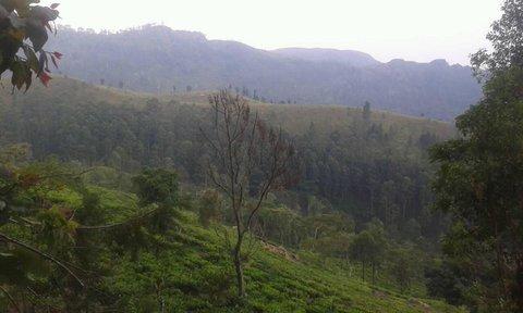 FOTKA - v prírode na Sri Lanke