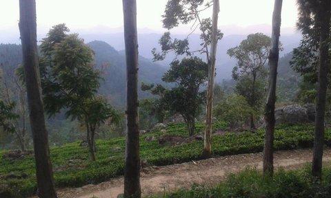 FOTKA - stromy na Sri Lanke,,