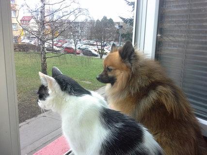 FOTKA - Pozorujeme co se venku děje