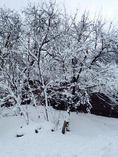 FOTKA - V lednu k nam přišla poradna zima