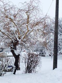 FOTKA - Sněhová nadílka