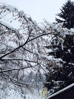 FOTKA - Sněhu máme plno a porad padá