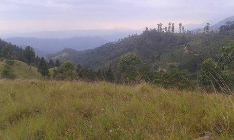 FOTKA - Prírodná Sri Lanka