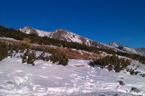 FOTKA - kosodrevina v snehu