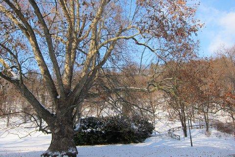 FOTKA - Zima na Petříně