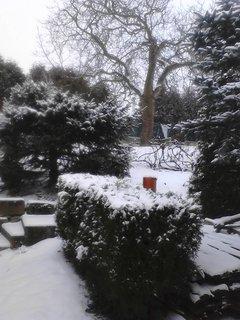 FOTKA - zahrada pod sněhem