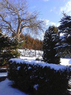 FOTKA - zimní zahrada zalitá sluncem