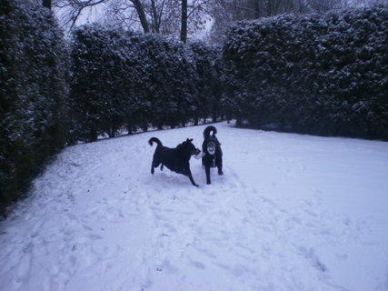 FOTKA - Užíváme si sněhové nadílky