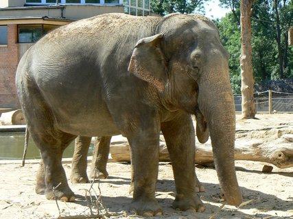 FOTKA - Slon v pražské ZOO