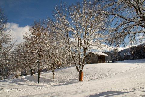 FOTKA - Konečně přišla zima na Ritzensee - Zasněžené stromy